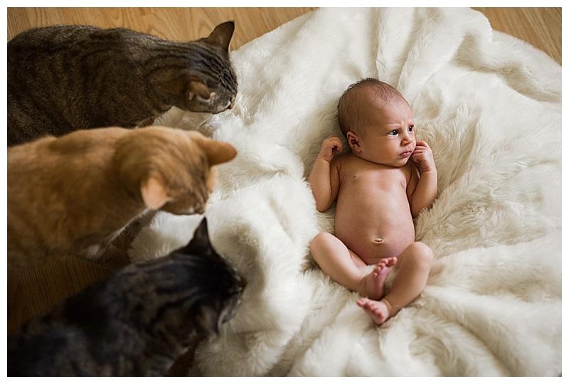 Baby with Cats ©BARNETT PHOTOGRAPHY